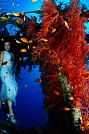 Image: 2nd place - Giordano Cipriani Italy Eilat Red Sea 2013 - Fish & fashion Category